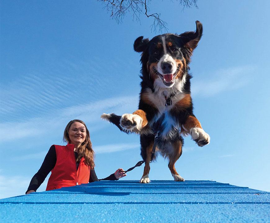 Owney Outdoor Hundetraining Teaser